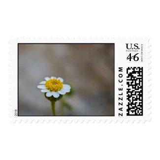 Wildflower 13 postage