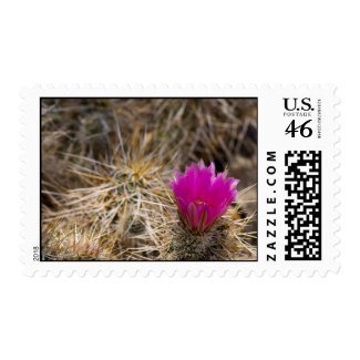 Wildflower 15 postage