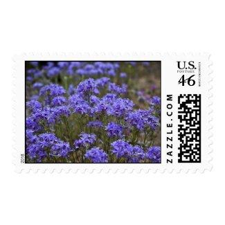 Wildflower 17 postage stamp