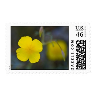 Wildflower 21 postage stamps
