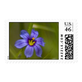 Wildflower 22 postage