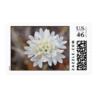 Wildflower 23 stamps