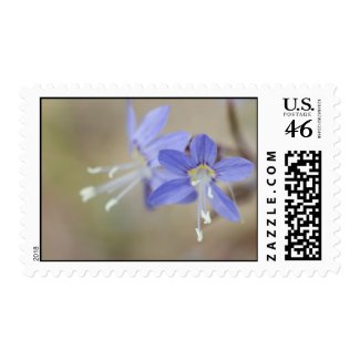 Wildflower 24 postage stamps