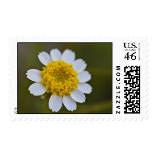 Wildflower 25 stamps