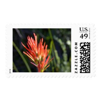 wildflower_37 postage stamp