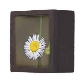 Wildflower 4 Gift Box