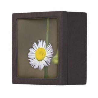 Wildflower 4 Gift Box planetjillgiftbox
