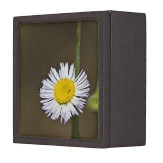 Wildflower 4 Gift Box Premium Jewelry Box