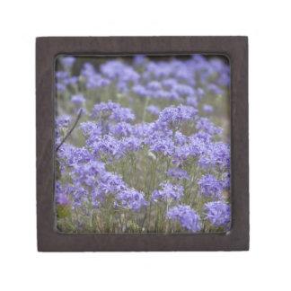 Wildflower 5 Gift Box