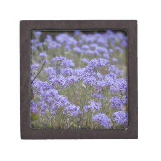 Wildflower 5 Gift Box planetjillgiftbox