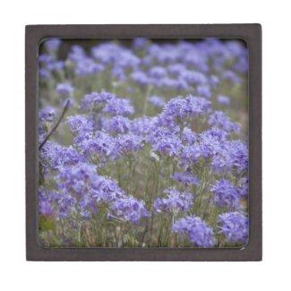 Wildflower 5 Gift Box Premium Trinket Box