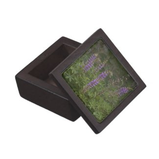 Wildflower 6 Gift Box planetjillgiftbox