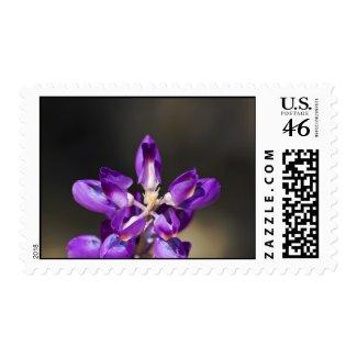 Wildflower 7 postage