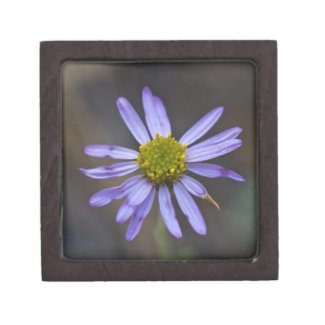 Wildflower 9 Gift Box planetjillgiftbox