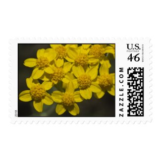 Wildflower 9 postage stamps