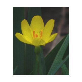 Wildflower amarillo lona estirada galerias