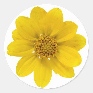 Wildflower amarillo pegatina redonda