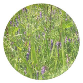 Wildflower - arveja copetuda plato