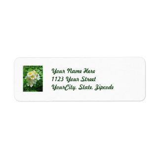 Wildflower blanco de los rosas de Multiflora Etiqueta De Remite