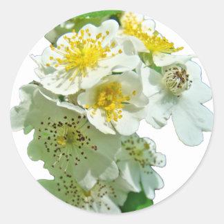 Wildflower blanco de los rosas de Multiflora Etiquetas Redondas