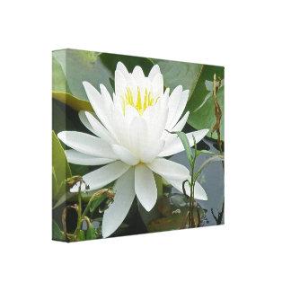 Wildflower blanco de Waterlily Impresion De Lienzo