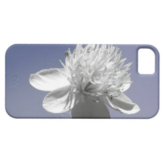 Wildflower blanco en el cielo azul iPhone 5 fundas
