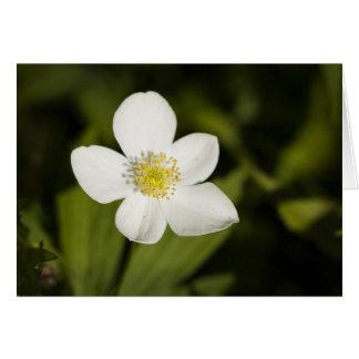 Wildflower bokeh card