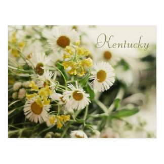 Wildflower Bouquet by JerseyFawn Post Cards