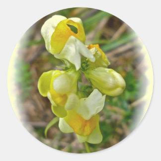 Wildflower Butter 'n Eggs Classic Round Sticker