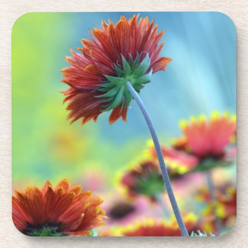 wildflower coaster set