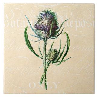 Wildflower de la antigüedad del cardo del escocés  teja