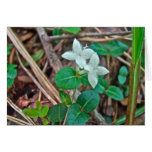 Wildflower de la baya de la perdiz tarjeton