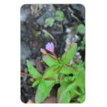 Wildflower de la botánica de la flor de la flora d imanes rectangulares