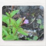 Wildflower de la botánica de la flor de la flora d tapete de ratones