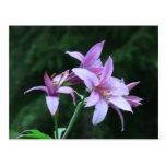 Wildflower de la botánica de la flor de la flora d tarjetas postales