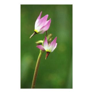 Wildflower de la estrella fugaz, California, los E Fotografías
