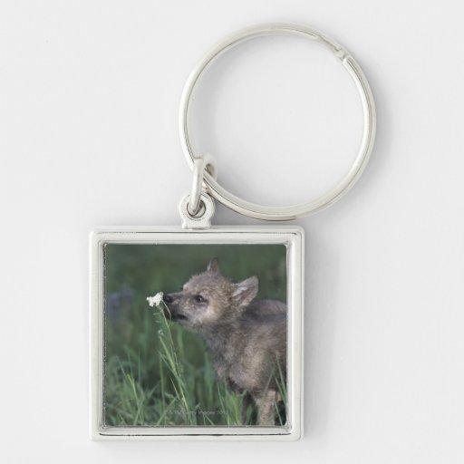 Wildflower de la montaña el oler del perrito de lo llaveros personalizados