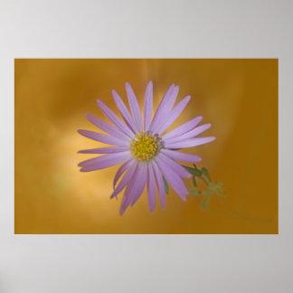 Wildflower del aster de Mojave Póster