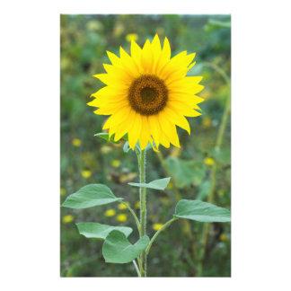 "Wildflower del girasol del flor folleto 5.5"" x 8.5"""