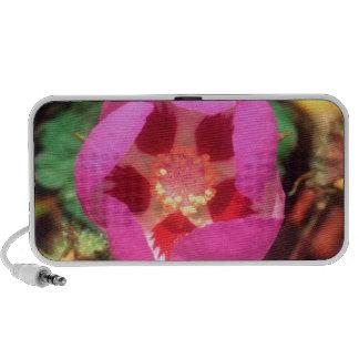 Wildflower del punto del desierto cinco iPod altavoz