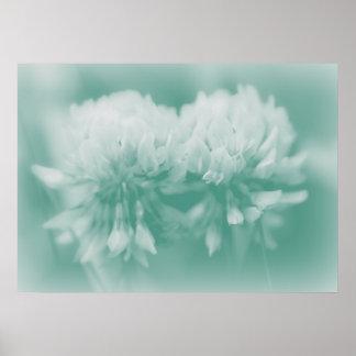 Wildflower del trébol blanco en aguamarina póster