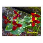 Wildflower del Trillium rojo de Berkshires Massach Tarjeta Postal