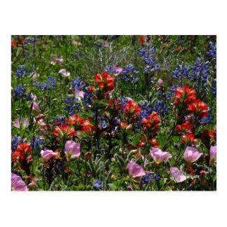 Wildflower Dreams Postcard