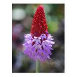 wildflower en la floración postal