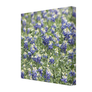 Wildflower Field Bluebonnets: Wide Zoom View Gallery Wrapped Canvas