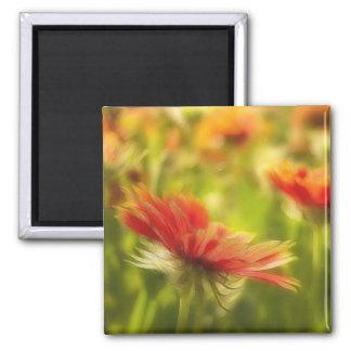 Wildflower Field - Gaillardia Magnet