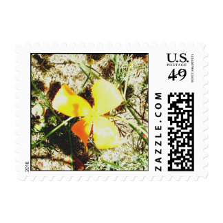 Wildflower Freedom Keepsake Collection Postage