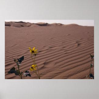 Wildflower in the Desert Poster