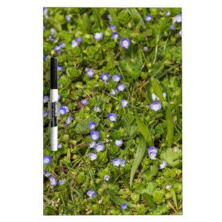 wildflower in the meadow dry erase board