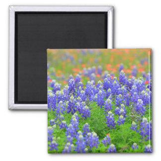 Wildflower Magnet
